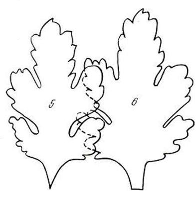 выкройка листа хризантемы