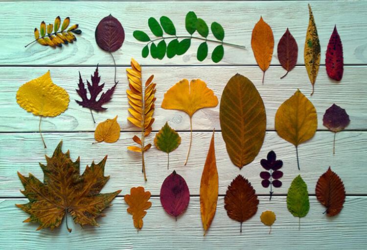 Как быстро высушить листья утюгом — для поделок и гербария