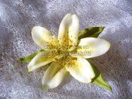 Лилия из фоамирана без использования молдов